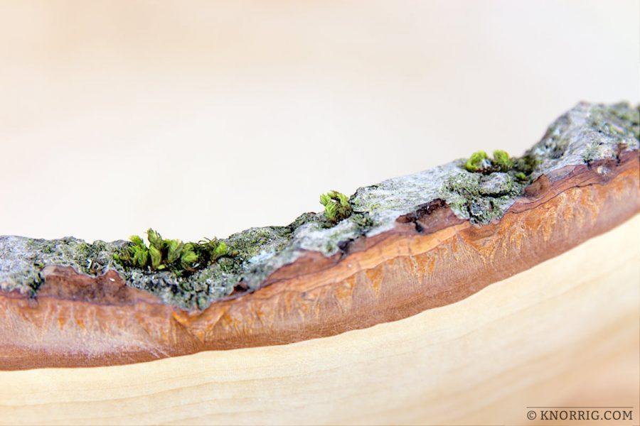Holzschale mit Rindenrand